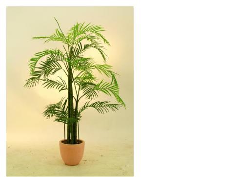 Areca Palme 13 Blätter/Zementtopf 120cm