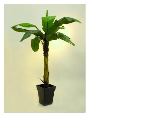 Bananenbaum 9 Blätter 220cm