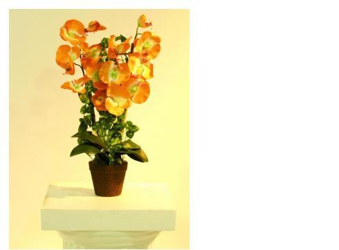 Orchidee orange im Topf 57cm