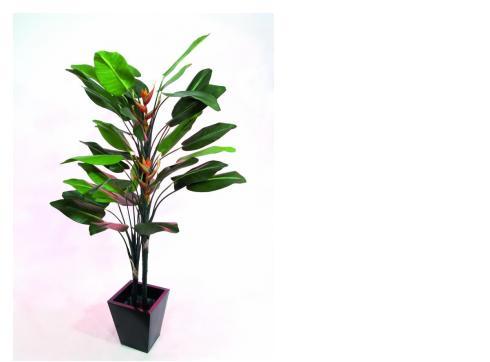 Strelizie mit zwei gr. Blüten 220cm