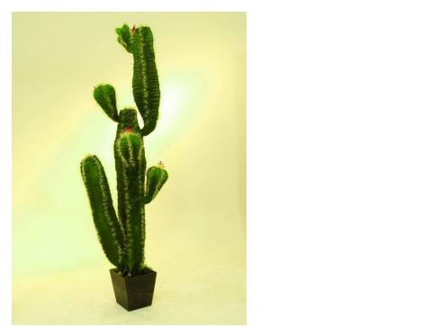 Mexikanischer Kaktus m. Blüten+Topf 170cm