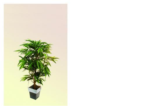 Longifolia Ficusbaum 1002 Blätter 150cm