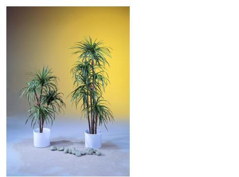 Yucca-Palme mit 2-fach Naturstämmen 90cm