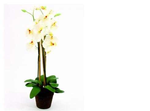 Orchidee weiß im Topf 80cm