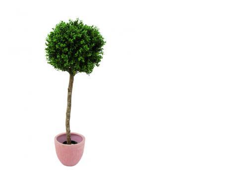 Buchsbaum grün 1188 Blätter 110cm